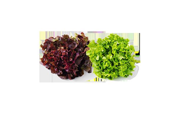 Subtly Sweet Red & Green Oakleaf Lettuce