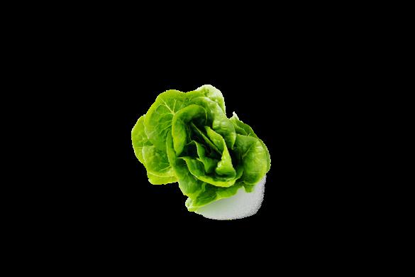 Crisp Crunchy Cos & Baby Cos Lettuce