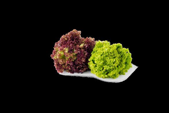 Leafy Fresh Red & Green Coral Lettuce