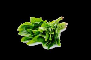 Leafy Fresh English Spinach