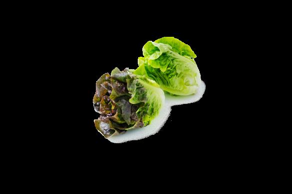 Tender & Sweet Little Gem Lettuce