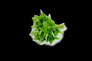 Fresh Fragrant Green Basil