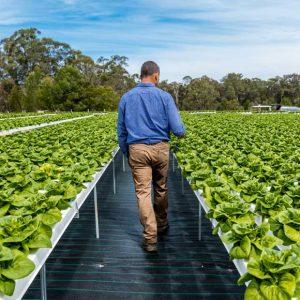 hydroponic-farming-australia-hydro-produce