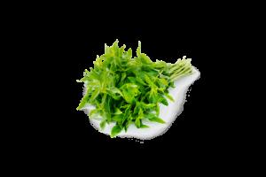 Fresh Fragrant Mint