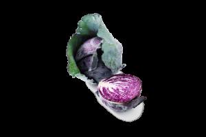 Leafy Fresh Purple Cabbage