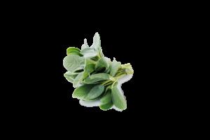 Fresh Fragrant Sage