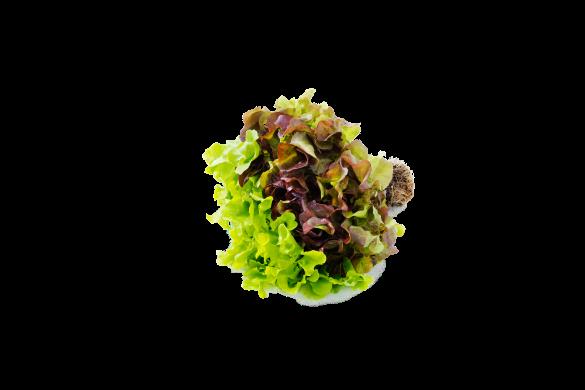Subtly Sweet Salad Oakleaf Lettuce