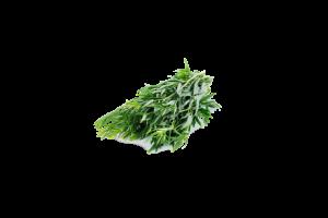 Fresh Fragrant Tarragon