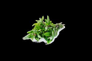 Fresh Fragrant Thai Basil