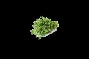 Fresh Fragrant Thyme