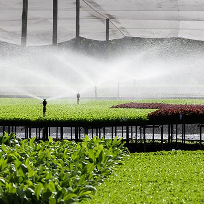 Kale lined arch - hydroponically farming Hydro Produce Australia